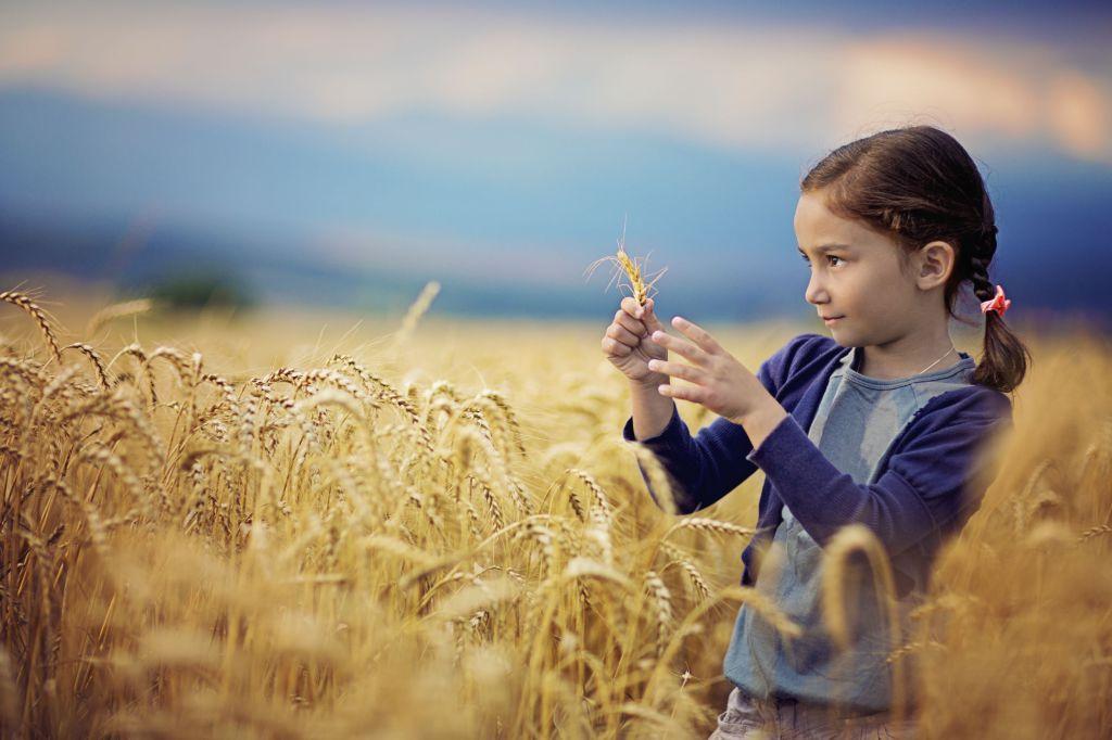 En liten jente i en kornåker